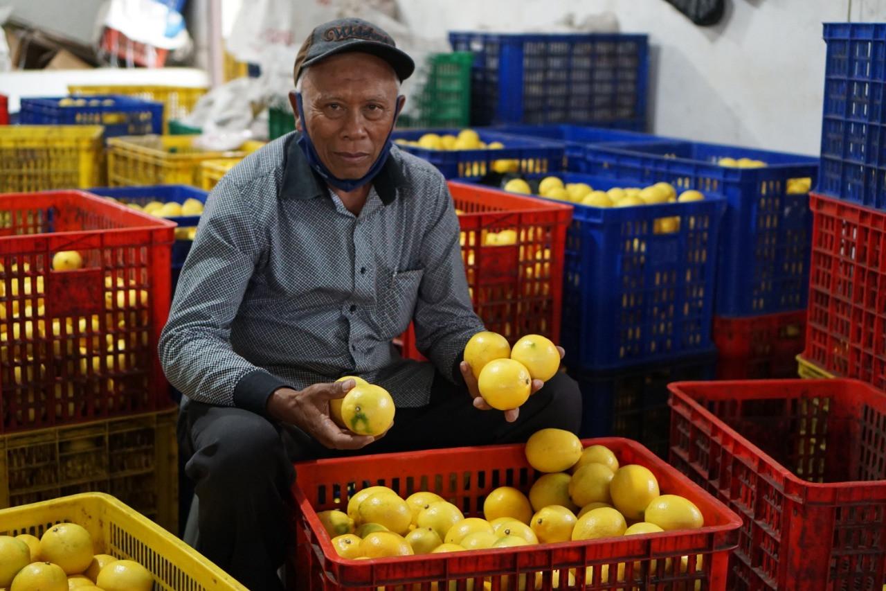 Kementan Fasilitasi Penjualan Lemon Petani ke Pasar Jabodetabek hingga Bali - JPNN.com