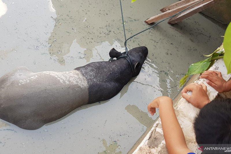 Julaiha Mendengar Suara Keras dari Kolam Ikan, Oalah, Ternyata... - JPNN.com