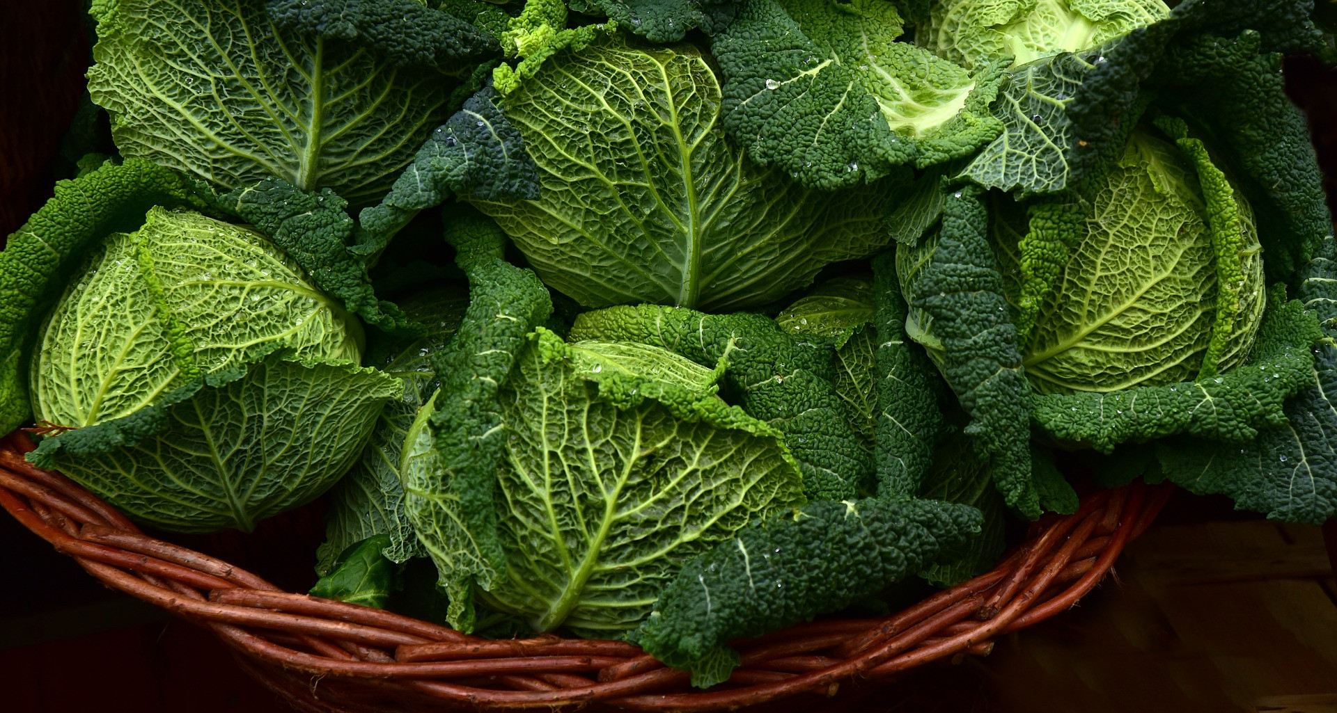 Suka Kubis, Yuk Ketahui 7 Khasiat Mengonsumsi Sayuran yang Satu Ini - JPNN.com