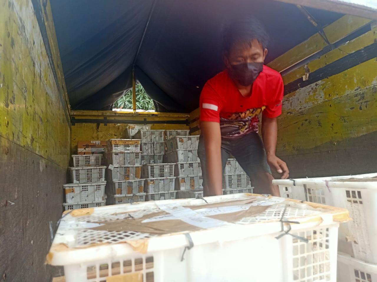 Petugas Geledah Muatan Truk di Pelabuhan Merak, Lihat Isinya, Tak Disangka - JPNN.com
