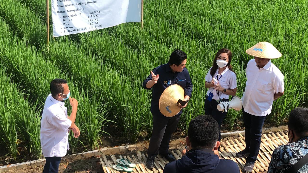 Ikhtiar Kedaulatan Pangan Nasional, Menteri BUMN Kunjungi Lokasi Program Petani Berdaya MAI Foundation