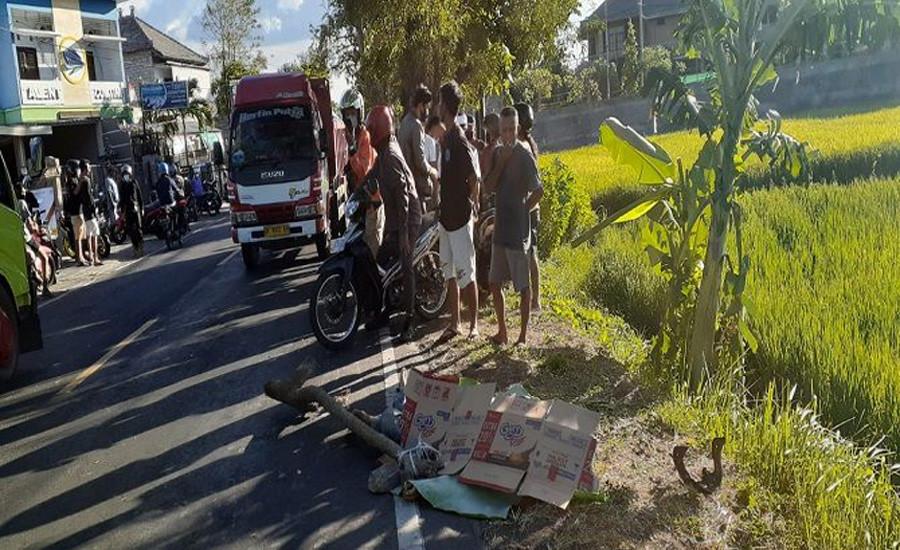Pemotor Tewas Ditabrak Truk di Bali Utara, Kondisinya Mengenaskan - JPNN.com Bali