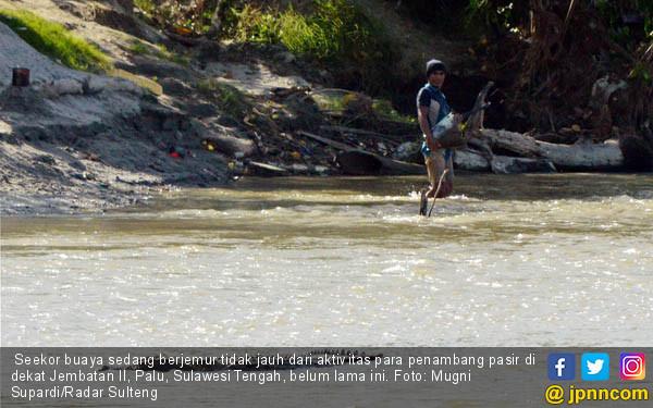 Buaya dan Penambang Pasir Tak Saling Ganggu - JPNN.COM