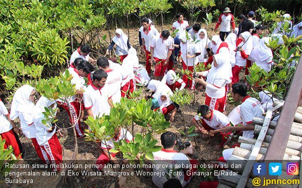 Kenali Alam, Pelajar Tanam Pohon Mangrove - JPNN.COM