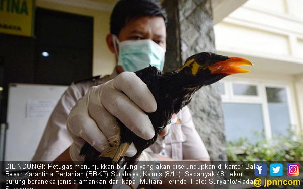 BBKP Surabaya Gagalkan Penyelundupan Satwa - JPNN.COM