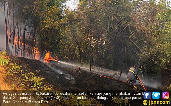 Si Jago Merah Amuk Hutan Dam Baloi - JPNN.COM