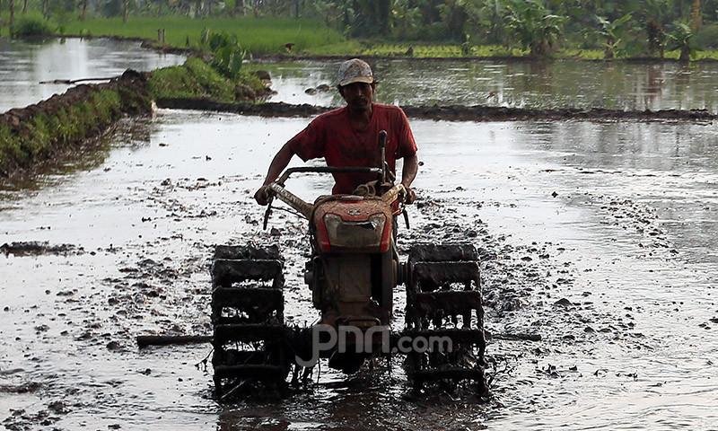 BPS Sebut Pertanian Jadi Sektor Andalan Pada Triwulan I 2021 - JPNN.com