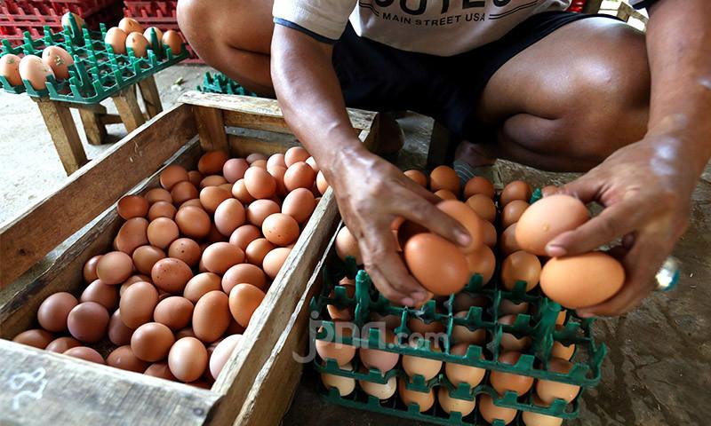 Harga Telur Ayam Jeblok, Mendag Punya Usul Begini - JPNN.com