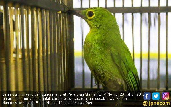 Pencinta Burung Jangan Khawatir Kriminalisasi, Santai aja