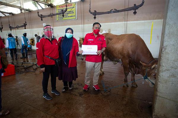 PDIP Surabaya Salurkan Daging Kurban 8 Sapi dan 4 Kambing, Dibagikan dari Rumah ke Rumah