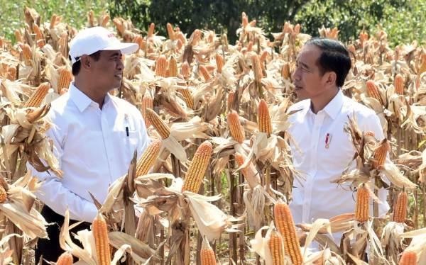 Presiden Jokowi Senang Impor Jagung Menurun Drastis