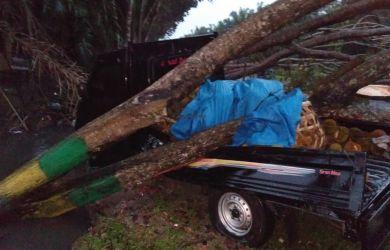 Angin Puting Beliung Mengamuk, Pohon Tumbang Timpa Mobil, Dua Warga Terluka