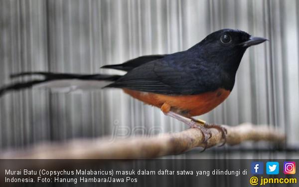 Berita Terbaru yang Penting Diketahui Para Pecinta Burung