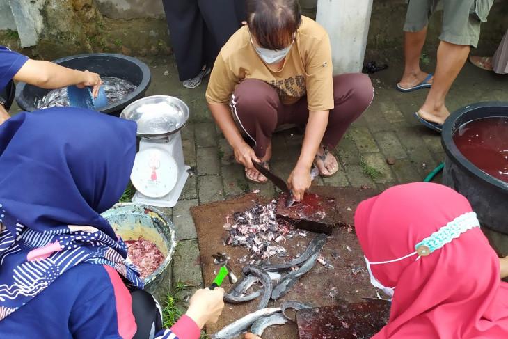 Sejumlah Guru di Kota Kediri Beternak Ikan Lele, Hasil Panennya Capai 1 Kuintal - JPNN.com Jatim