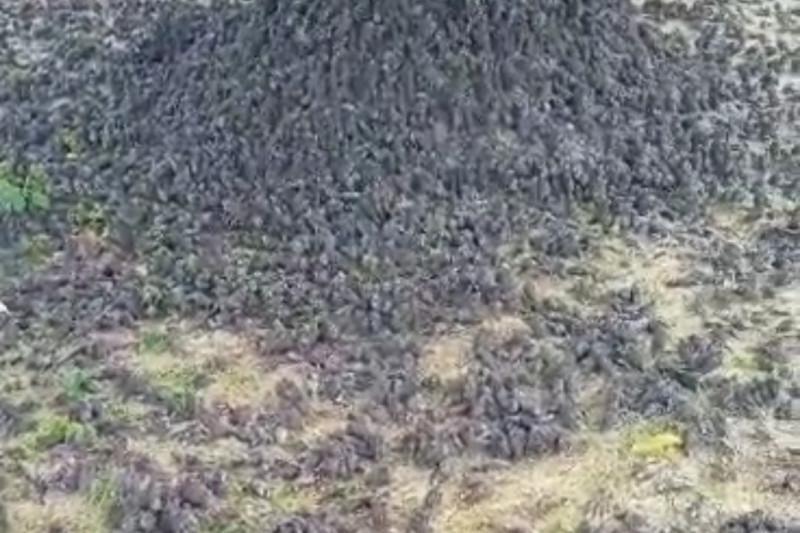Ribuan Burung Pipit di Gianyar Bali dan Cirebon Jabar Mati Mendadak, Ini Kata Ahli Zoologi BRIN - JPNN.com Bali