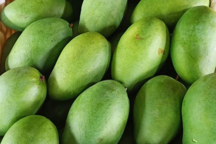 1,3 Ton Mangga Hasil Pertanian Jatim Diekspor ke Singapura, Peran eTaniSangat Besar - JPNN.com Jatim