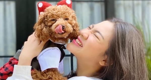 Anjingnya Superlucu, Felycia Suka Banget sama Film Hollywood Ini - GenPI.co