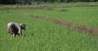 Saat Wabah Virus Corona, Kementerian Pertanian: Stok Pangan Aman - GenPI.co