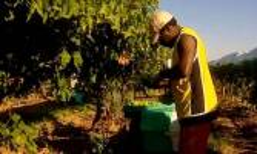 Kerja Paksa di Sektor Perkebunan Australia Dinilai Mirip Perbudakan - JPNN.COM