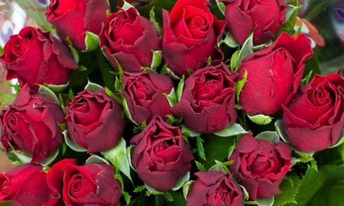 Asal-Muasal Bunga Mawar Hari Valentine di Australia - JPNN.COM