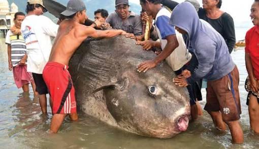 Wow! Nelayan Tangkap Ikan Seberat 1 Ton, Bentuknya Aneh - JPNN.COM