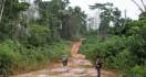 East Kalimantan Jungle in Dire Situation - JPNN.com