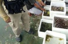 TNI AL Tangkap Penyelundup Ikan Hias ke Singapura - JPNN.com