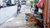 Semua Anjing Peliharaan Wajib Divaksin Rabies - JPNN.COM