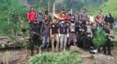 Temukan 15 Hektare Ladang Ganja di Hutan, Sebagian Dulu Dimusnahkan - JPNN.COM