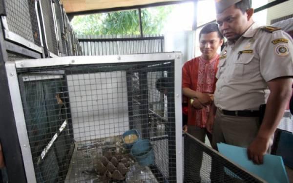 Polair Kepri Gagalkan Penyelundupan 1.300 Ekor Burung dari Malaysia - JPNN.com