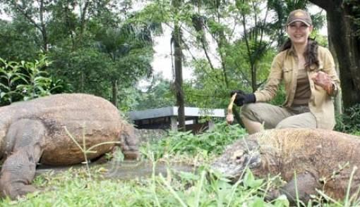 Dua Tahun Zeby Febrina Getol Kampanyekan Komodo Jadi Keajaiban Dunia