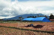 ANEH! Anggaran Naik tapi Produksi Pertanian Tak Meningkat - JPNN.com