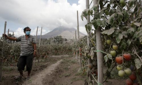 Petani di Sinabung Mengeluh Tak Punya Modal Lagi