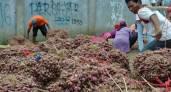 Kasihan, Petani Bawang di Brebes Terancam Gagal Panen - JPNN.COM