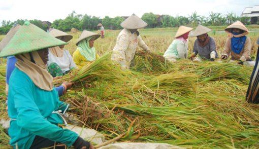 Banyak Petani yang Tidak Terdaftar RDKK - JPNN.COM