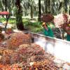 Indonesia Terancam Kehilangan Pasar Minyak Sawit di India - JPNN.COM