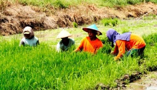 Kebijakan Pertanian Justru Tingkatkan Produksi dan Sejahterakan Petani - JPNN.COM