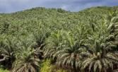 Perusahaan Sawit di Pulau Laut Dilaporkan ke Kementerian LHK - JPNN.COM