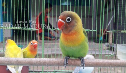 Hasil Penelitian Ungkap Manfaat Menonton Burung, Wouw! - JPNN.COM