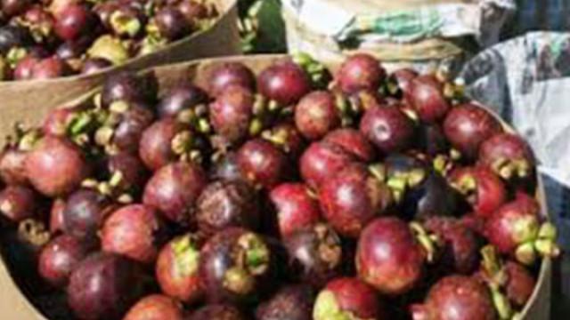Kementan Dukung Penuh Pasar Ekspor Manggis - Ekonomi JPNN com
