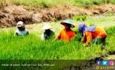 FAO: Jumlah Petani Terus Berkurang - JPNN.COM