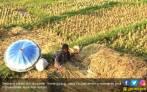 Pekerja Migran Bertambah, Petani di Desa Makin Berkurang - JPNN.COM