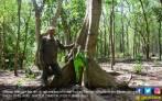 Jatim Masih Butuh Polisi Hutan - JPNN.COM