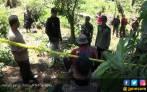 Polisi Temukan Ladang Ganja di Kaki Gunung Tanggamus - JPNN.COM