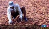 Ketahui Manfaat Rumput Laut untuk Penderita Hipertensi - JPNN.COM