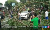 Gubrak! Mobil Tertimpa Pohon Tumbang, Bocah 8 Tahun Selamat - JPNN.COM