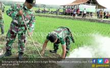 Lihat, Polri, TNI dan Masyarakat Gotong-royong Berburu Tikus - JPNN.COM