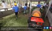 Kelompok Tani Ini Mampu Produksi Kompos Hingga 1.000 Ton - JPNN.COM