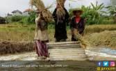 Berkat Subak, Petani Bali Panen Padi Tiap Hari - JPNN.COM