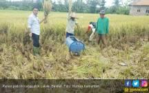 Geliat Panen Berlanjut di Kabupaten Lebak - JPNN.COM